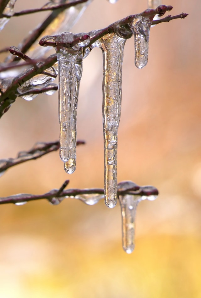 Two icicles melting